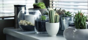 different types of plants on a shelf near a window