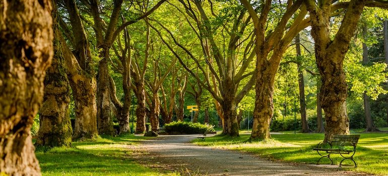 a park with trees and a bench